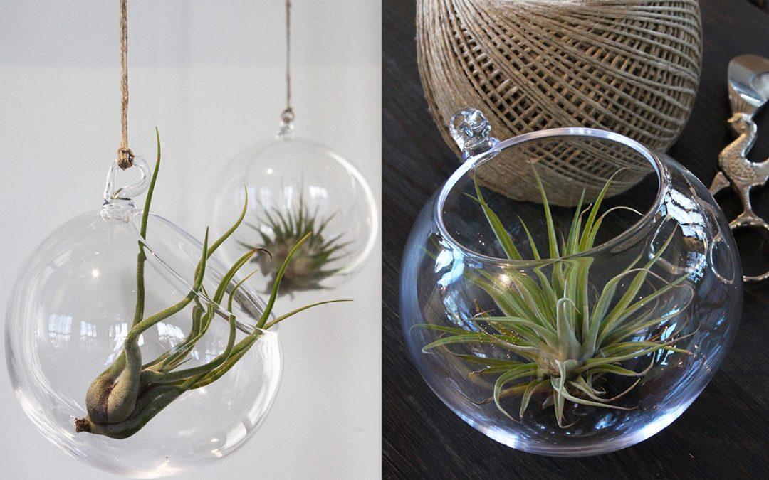 Lasistudio Mafka&Alakoski: Tillandsia-ilmakasvi ja lasipallo